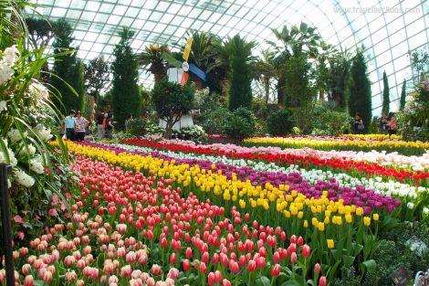 Tulipmania_SG_TB5