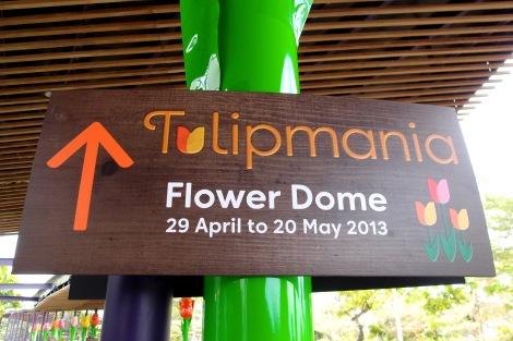 Tulipmania_SG_TB0