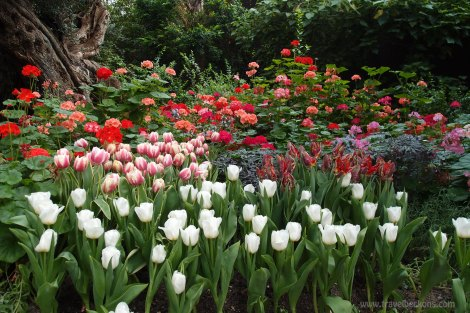 Tulipmania_SG_TB7
