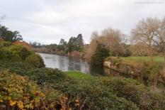 A glimpse of Waikato River
