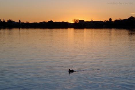sunset at hamilton lake duck