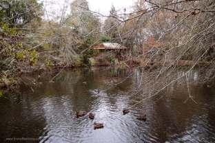 Idyllic lake.