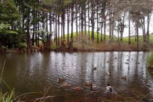 Trees & ducks.