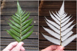 New Zealand's Silver Fern Leaf.