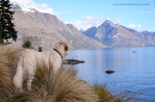 Even the doggy loves the scenery