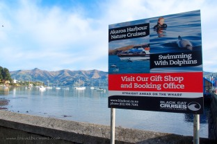 Hello, Akaroa Harbour!