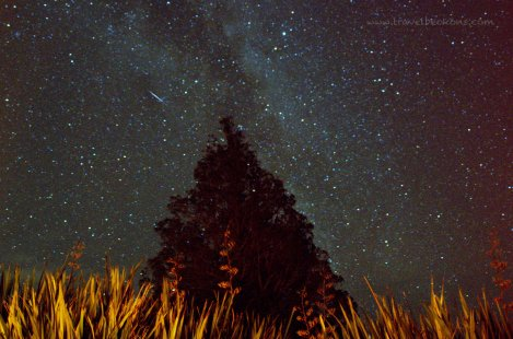stars_opotiki