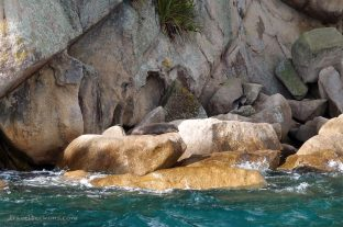 Hellooooo, lazy seals!
