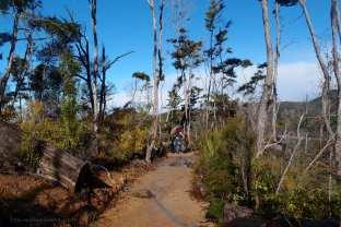 Abel Tasman Expedition (TB)