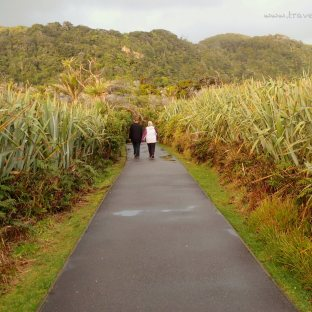 Punakaiki Travel