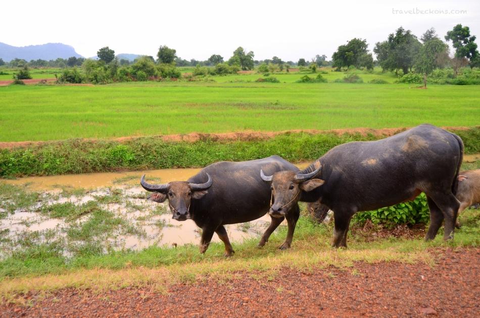 Battambang_Travelbeckons3