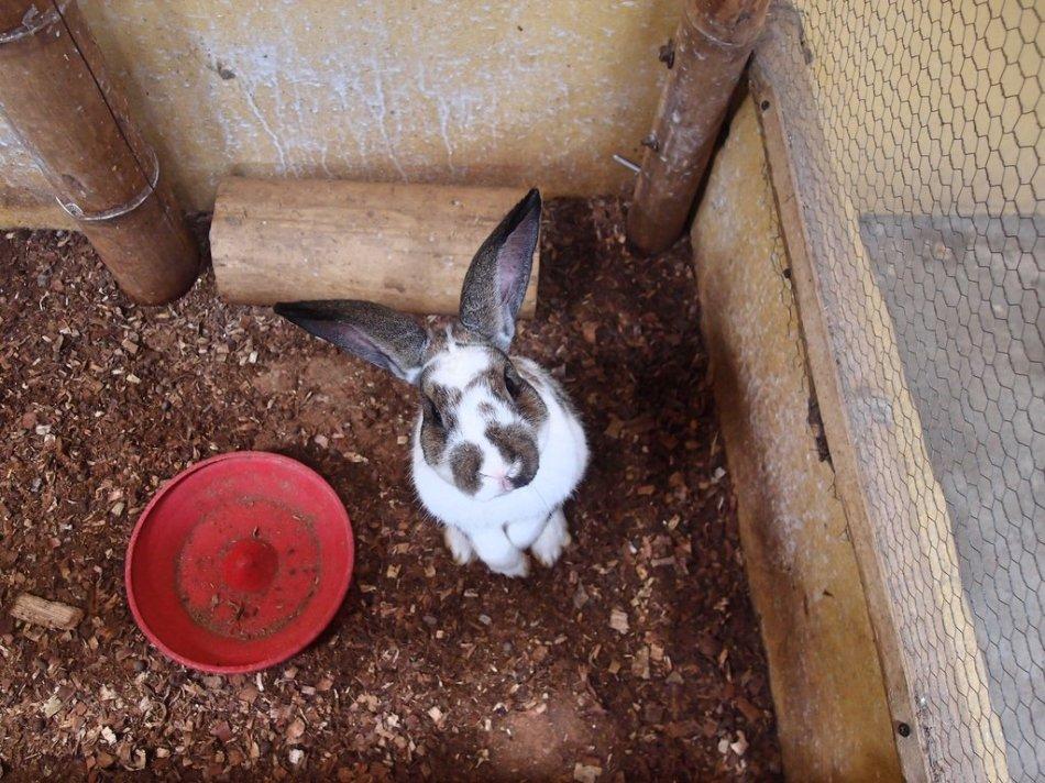 travelbeckons_trip101_panaca-quindio_rabbit