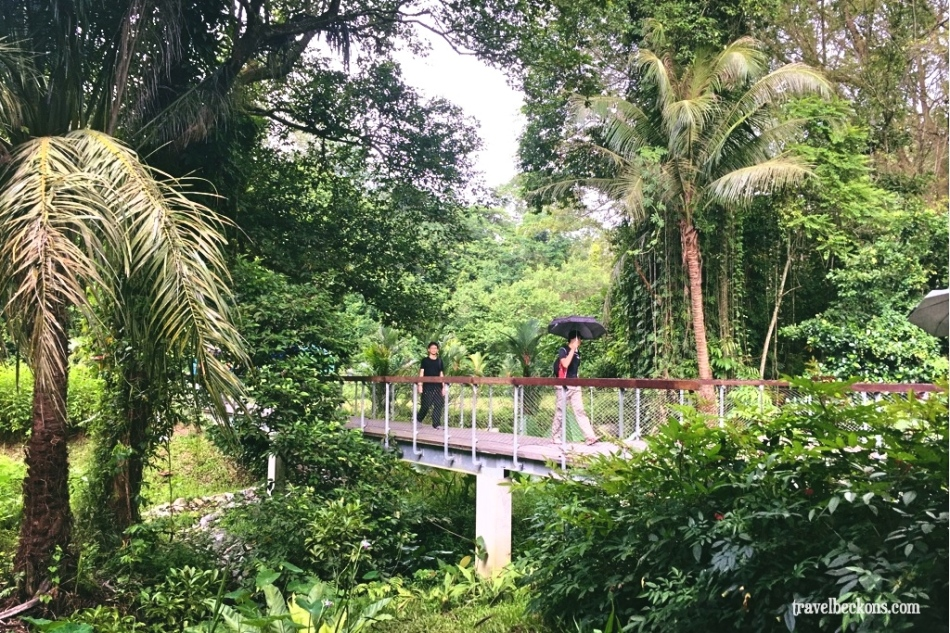 LoveMacRitchie_Singapore_TravelBeckons6