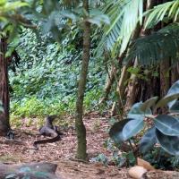 Vipassana Experience Day 8: Law of Nature