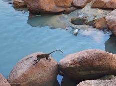 Monkey at Cempedak Bay