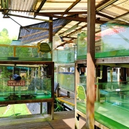 LiveTortoiseTurtleMuseum_SG_Travelbeckons18
