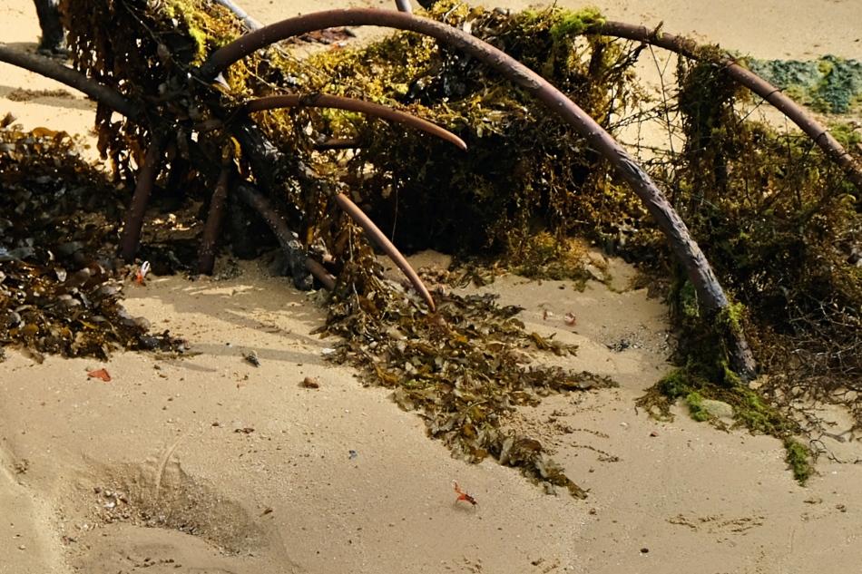 SouthernIslands_Tb12_crab